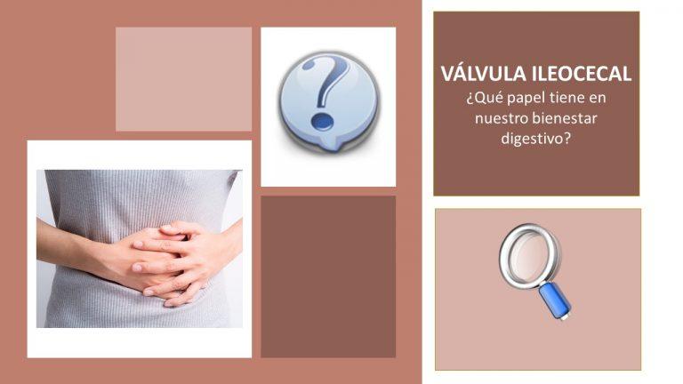 La Válvula Ileocecal y su papel en el bienestar digestivo