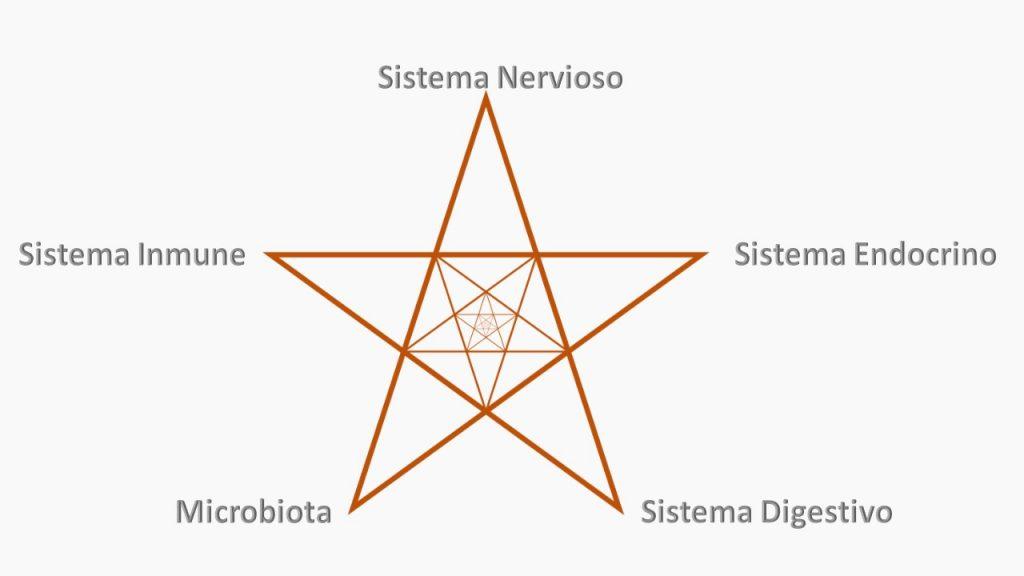 Triangulo de comunicación S.I. - S.N. - S.E. - S.D - Microbiota