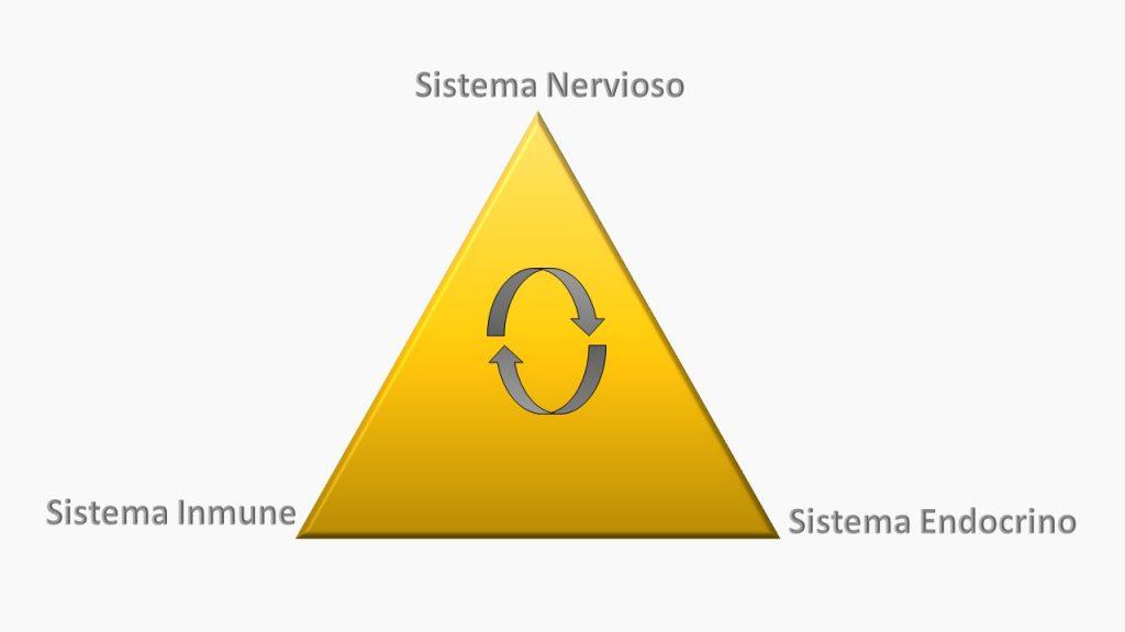 Triangulo de comunicación S.I. - S.N. - S.E.